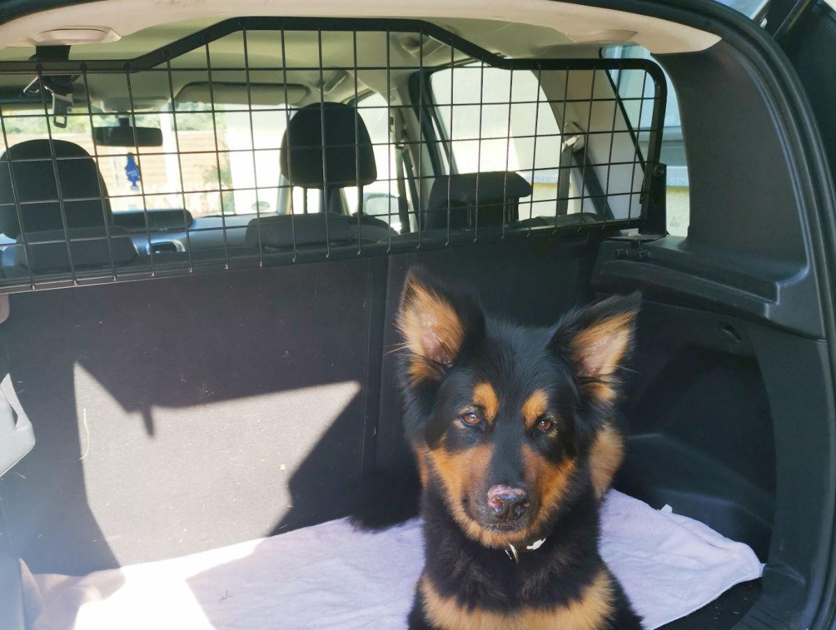 Kofferraumabtrennung für Hunde
